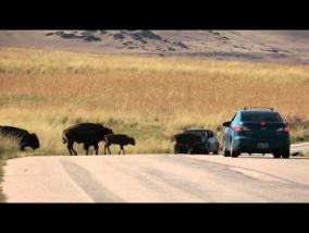 Antilope Island. Пол часа от центра СЛС - и вы в прерии с дикими бизонами